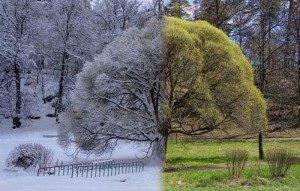 arbre_hiver_ete
