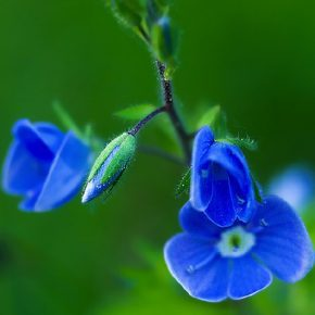 4a0b_fleurs_bourgeons_vif
