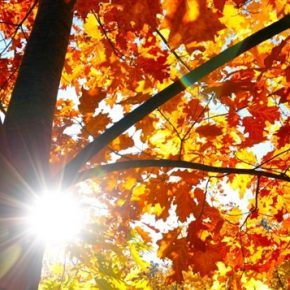 Une rentrée sous le signe de l'automne