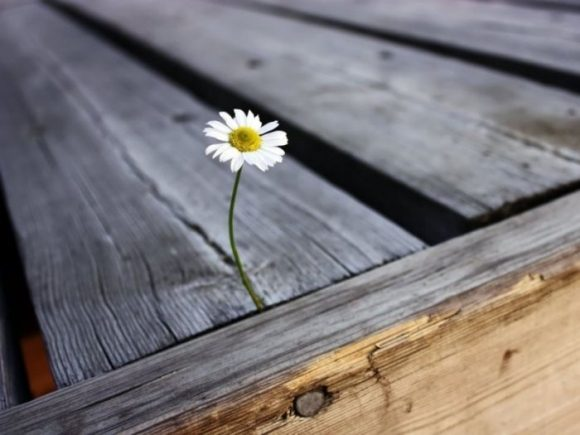 Fleur Poussant Entre Des Planches